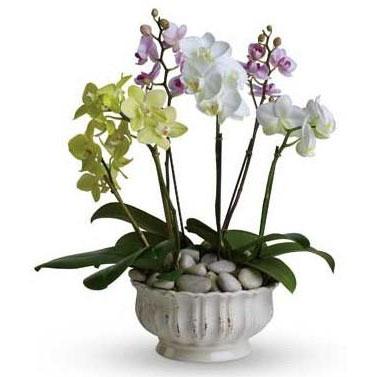 Seramikte renkli Orkideler