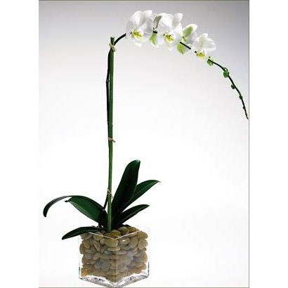 Orkide dekor