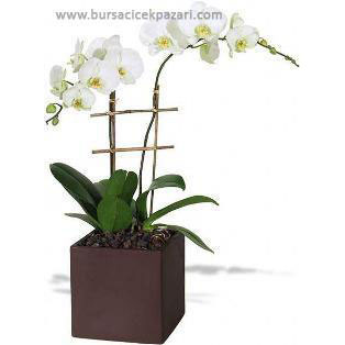 Seramikte orkideler