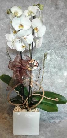 seramikde beyaz orkide